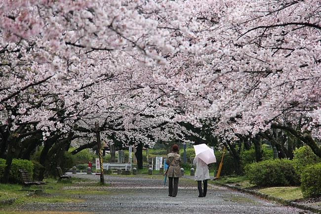 สังคมที่อยู่อาศัยยุค 5.0 ญี่ปุ่นนำร่องประเทศแรก
