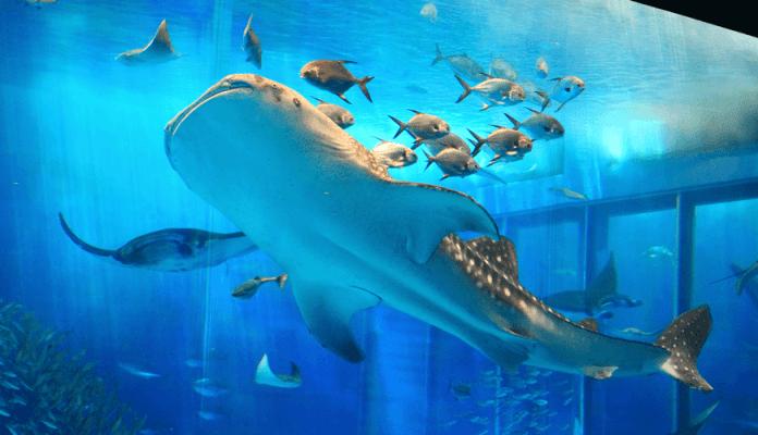 พิพิธภัณฑ์สัตว์น้ำชุราอูมิ
