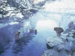 สวนลิงจิโกคุดานิ (Jigokudani Yaen Park)