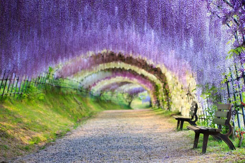 Kawachi Fuji Garden ฟุกุโอกะ