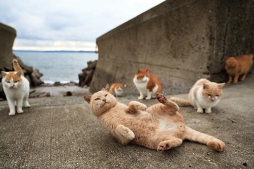 เกาะแมว เอโอชิม่า Aoshima Cat Island